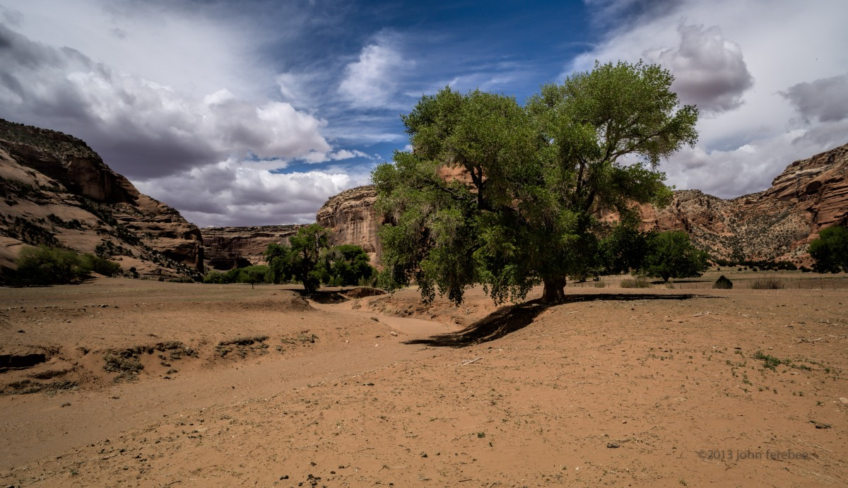 Canyon de Chelly Sycamores