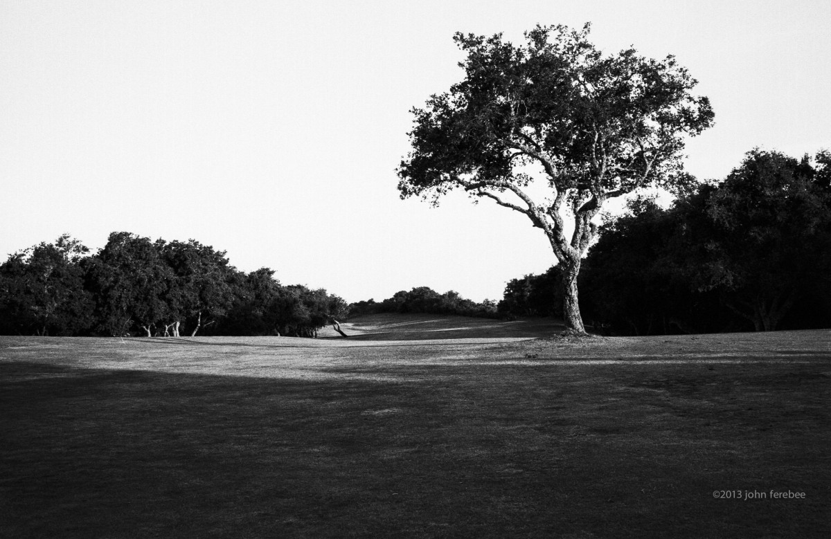 Second Hole Oak