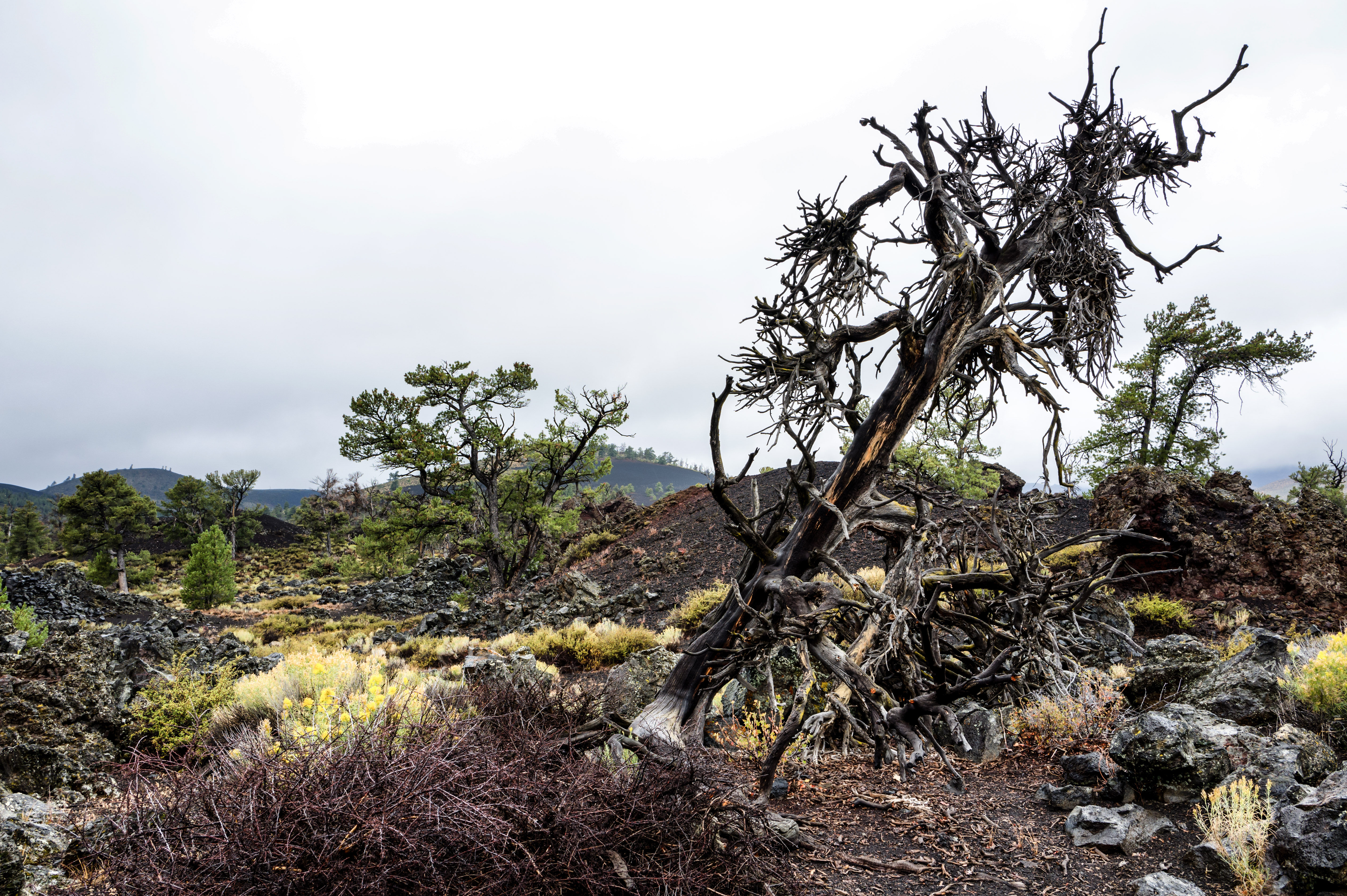 Craters of the Moon National Park, ID